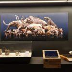 El perezoso gigante que habitó el sur de Costa Rica: la bestia de Sibö hace 5.8 millones de año