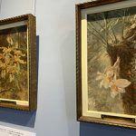 Vea 17 obras en el Museo Nacional: Artista alemán pintó orquídeas de Costa Rica