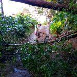 Ráfagas de 100 km/h o más provocan caída de árboles y frío intenso por nuevo empuje frío